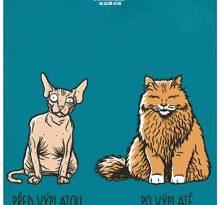 Kočka před a po výplatě - modré pánské tričko