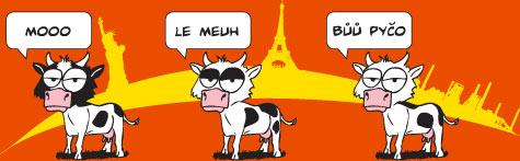 Jak dělá kráva v Ostravě